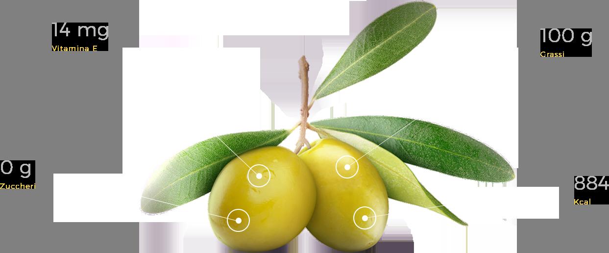 Anatomy Olive